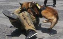 """""""Un câine de poliţie face cât zece poliţişti"""""""