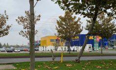 Pădurile IKEA, o afacere ascunsă și păguboasă